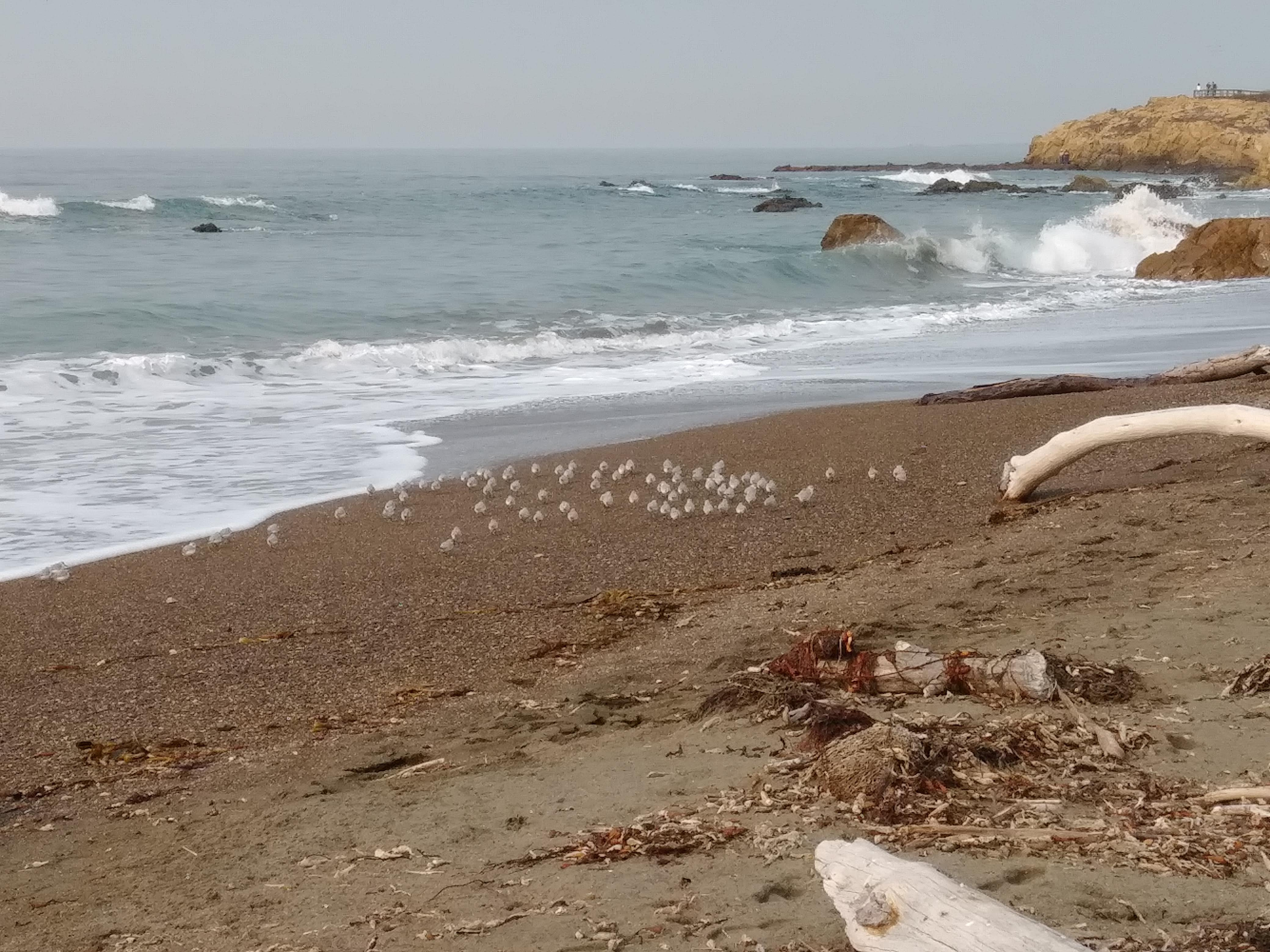 Road trip to the California Central Coast : Part 2
